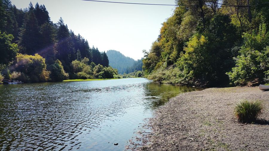 A Day At The River Russian River Valley Russian River Guerneville Monte Rio Forest California Tranquility Scenics Waterfront Nature Tree Water Clear Sky Mountain