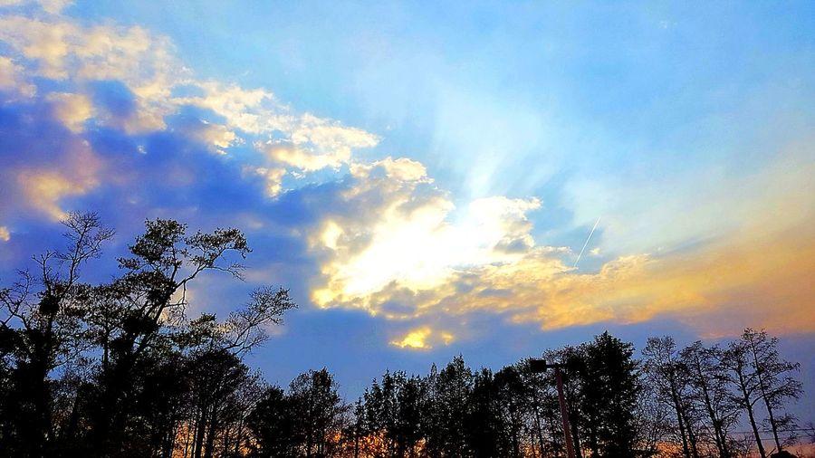 Tree Forest Sky Cloud - Sky Treetop