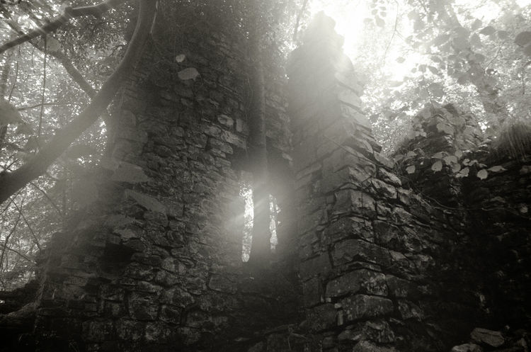 Monochrome Forest Low Angle View Outdoors Adventure Ruin Peaceful Peace And Quiet Scenics No People Wales Spooky