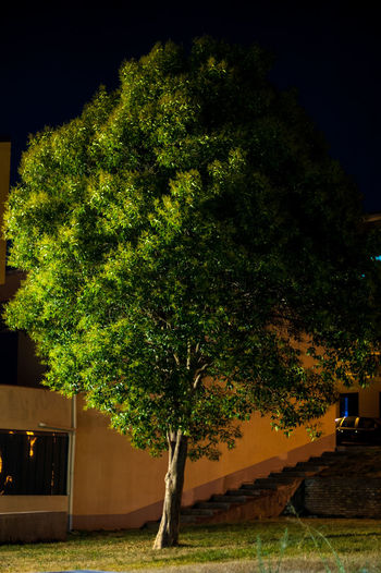 Trees growing on field against building at night