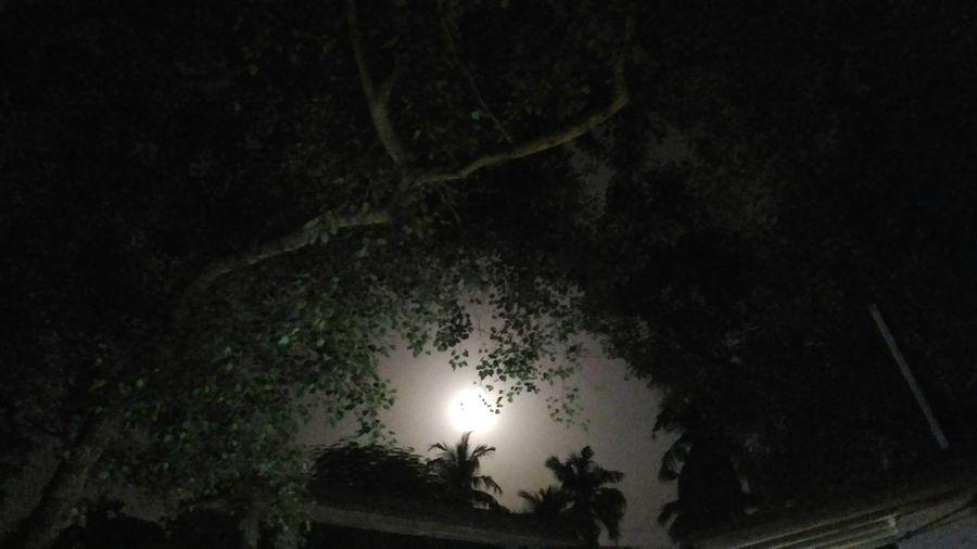 Moonlight Moon
