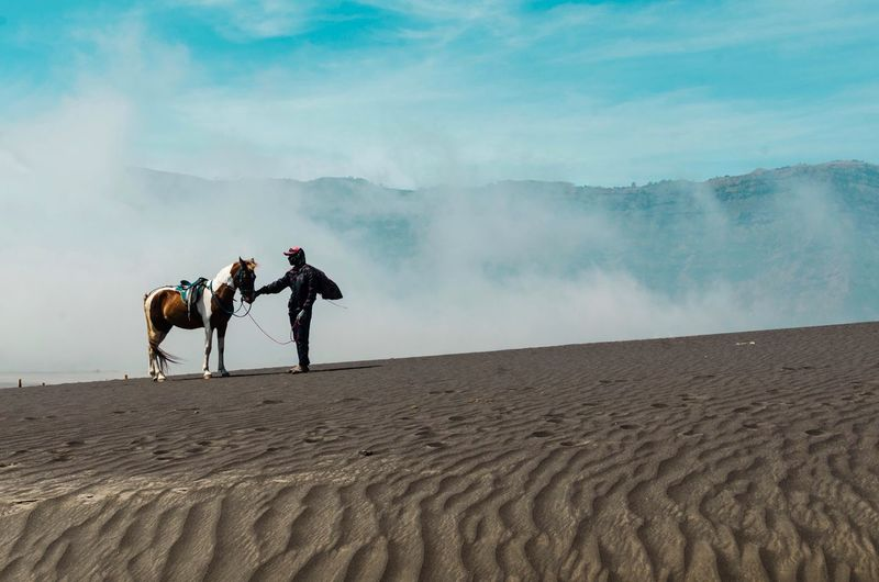 Bromo horseman at mountainside of Mount Bromo . Sand Patterns Sand Horse Valcano Bromo Tengger Semeru National Park Horseman Bromo Mountain Traveller Mammal Real People Domestic Animals Men Sand Domestic Desert Land Riding Scenics - Nature Beauty In Nature People Two People Sky Pets Nature Landscape Ride Arid Climate Outdoors