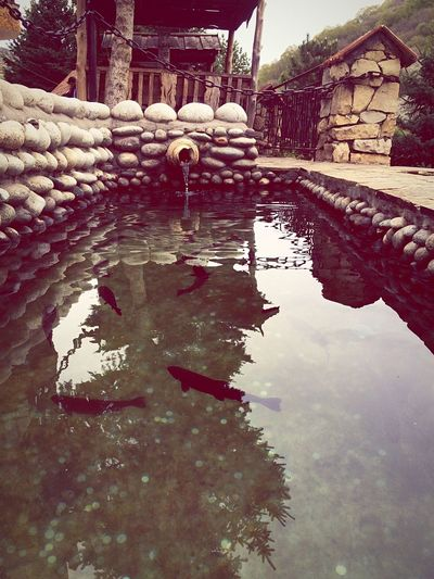 Russia Kaukaz Россия Кавказ Минводы минеральныеводы В горах карачаевочеркессия горы кавказа кавказские горы Mountain путешествия Kaukasus Mountains Water Fish