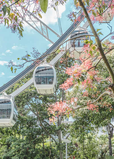 Tree Plant Nature Day Growth Built Structure Sky Architecture No People Transportation Building Exterior Outdoors Flower Mode Of Transportation Amusement Park Ride Amusement Park Public Transportation Train Flowering Plant Branch Cherry Blossom Wallpaper Ferris Wheel Ferriswheel Tree And Sky