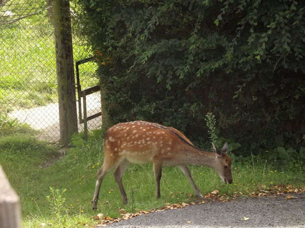 Animal Animal Themes Animal Wildlife Animals In The Wild Day Deer Forest Full Length Herbivorous Land Mammal Nature No People One Animal Outdoors Plant Side View Standing Tree Vertebrate