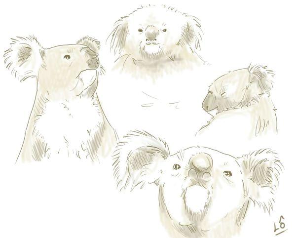 Croquis Dessin Drawing Sketchbook Koala Australia Australie