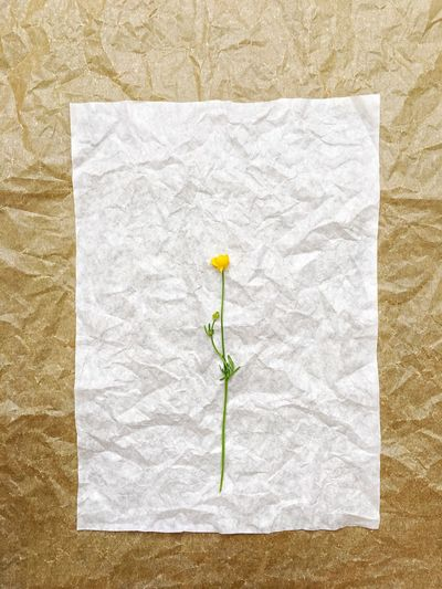 Directly above shot of yellow flower on crumpled paper