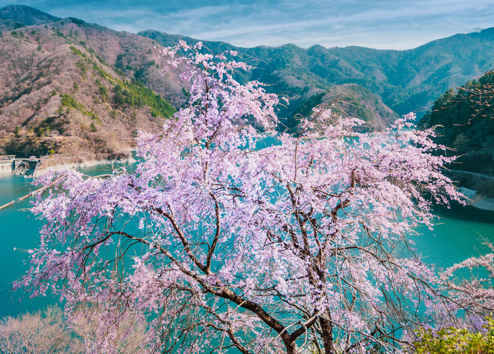 Scenic view of blue and mountains against sky with cherry tree blossoms in foreground and lake.