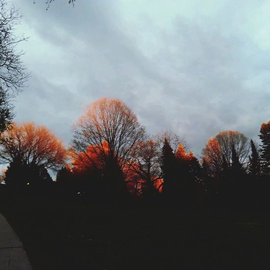 trees caught the sunset
