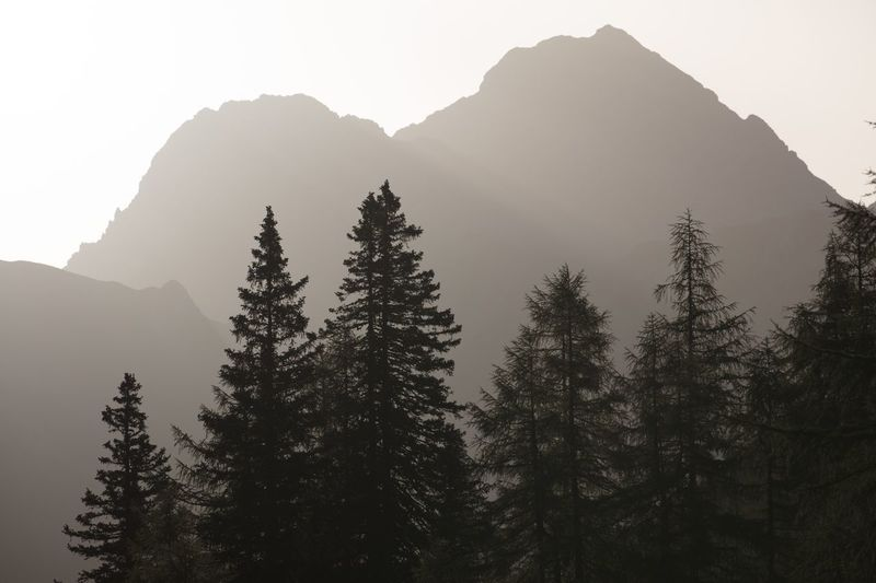 Mountain Silhouette Nature Tree Peak Forest No People Clear Sky High Day