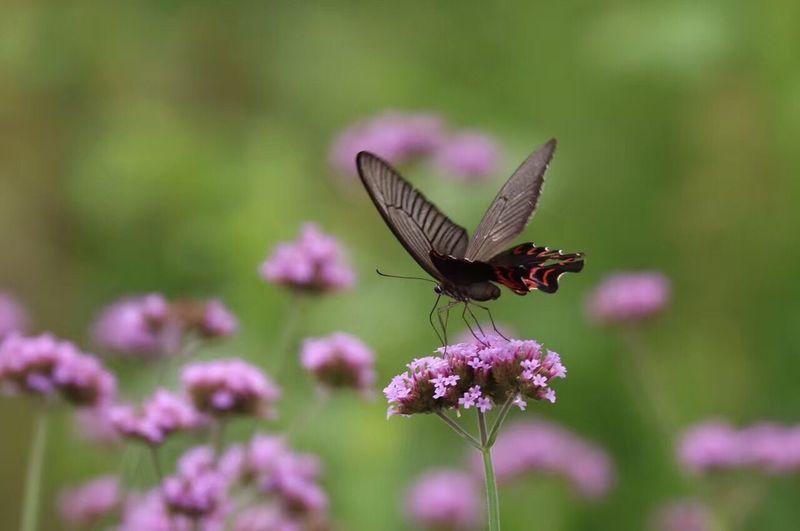 Butterflies pollinating on flower