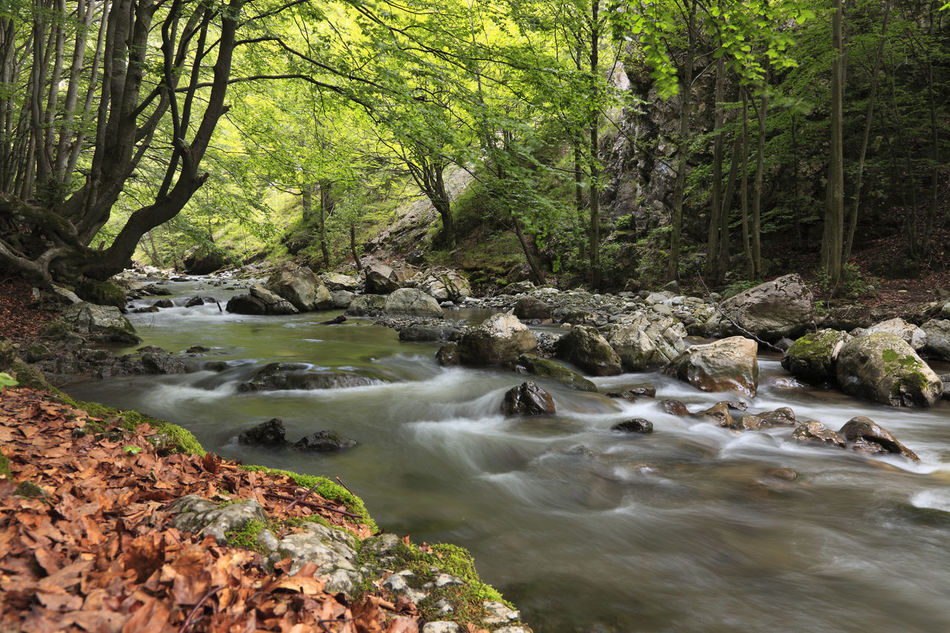 River in a green forest. Summertime Background Beauty In Nature Blur Motion Blurred Motion Environement Flower Flowing Water Forest Long Exposure Motion Nature Outdoors River Scenics Summer Tranquil Scene Tree Water