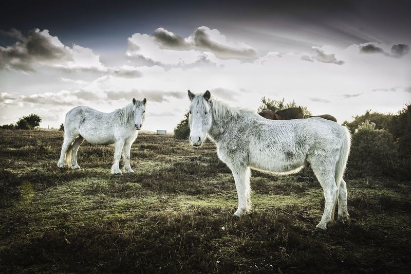 Horses Standing On Countryside Landscape