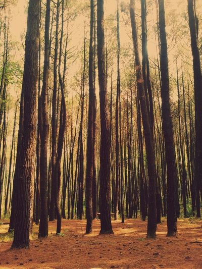 Hugging A Tree Eye4nature Eye Em Best Shots