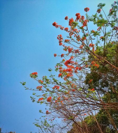 Nature_collection Nature Photography Summer Views Tree_collection  Flowerontree Flowers,Plants & Garden Flowerstagram Flowerphotography Summerdays  Sunny☀ Sunlight Through Trees PortraitPhotography Naturescape Greenery Planet Earth Orangeflowers
