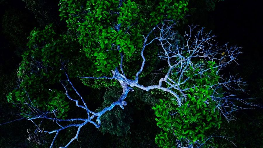 pucuk pokok Johor, Malaysia Aerial View Aerialphotography EyeEm Selects Topdown Eyebird Mavicpro Mersing DJI Mavic Pro Aerial Shot JungleTracking No People Plant Nature Tree Outdoors Motion Night Close-up Pattern Drop Full Frame Scenics - Nature Architecture