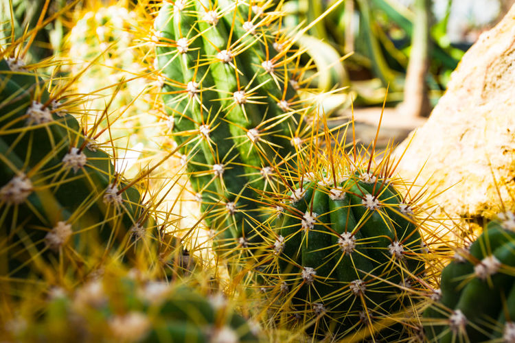 Close-up of cactus plant on field
