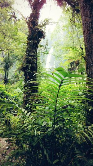 is this wonerfull Nature Waterfall Paradise! Indonesian Culture