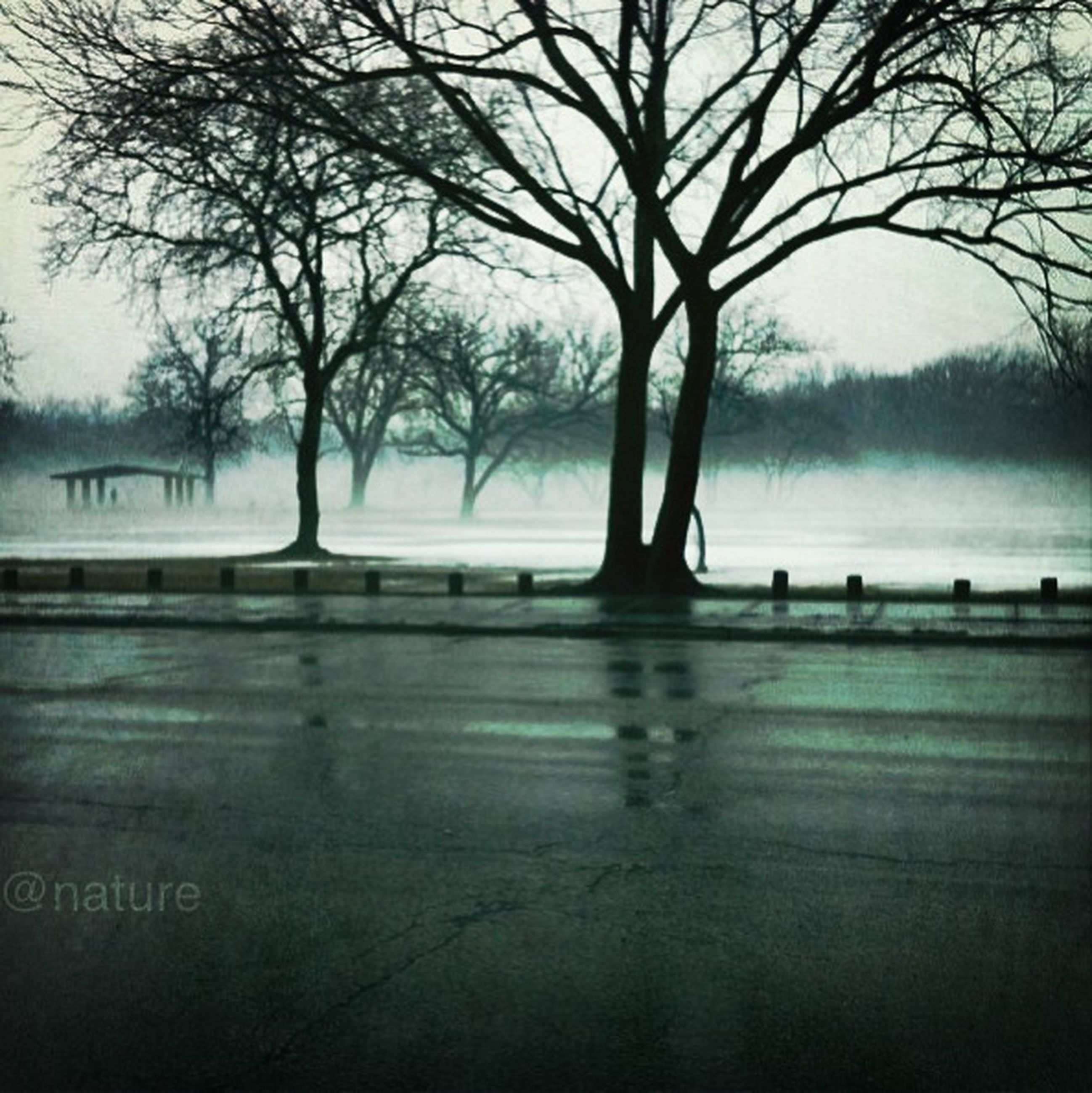 tree, bare tree, water, tranquility, silhouette, tranquil scene, transportation, nature, scenics, branch, road, fog, the way forward, tree trunk, beauty in nature, sky, river, lake, railing, outdoors