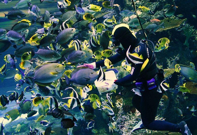 Singapore Sentosa Island Sea Life Sea Fish 水族馆 喂鱼