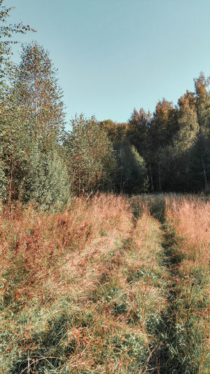 tracks through the autumn woods Hay Tracks Quadbike Trip Rural Scene Russia Dry Grass Widlflowers August Autumn colors Fieldscape Tree Sky Grass Growing Farmland Clear Sky Tranquil Scene Tranquility Scenics Countryside Green Growth Calm Stalk