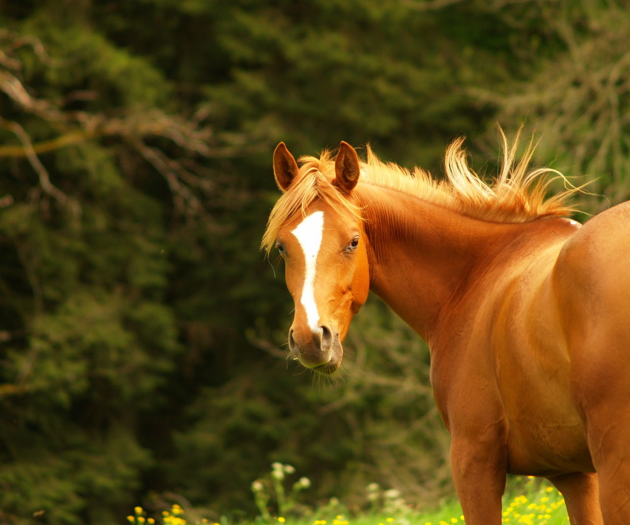 animal, horse, mammal, domestic animals, animal themes, domestic, vertebrate, livestock, animal wildlife, pets, focus on foreground, one animal, brown, field, land, day, working animal, looking at camera, nature, no people, herbivorous, outdoors, ranch