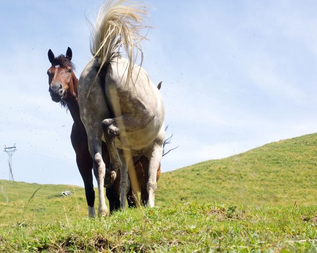 Domestic Animals Animal Themes Horse Mammal Livestock Field Two Animals Nature Day Outdoors Grass No People Pet Portraits The Week On EyeEm Standing Sky Landscape Mountain Beauty In Nature Bannalp Switzerland Pet Portraits