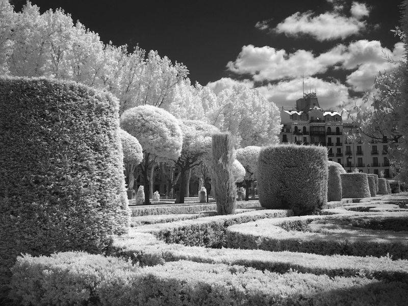 Clouds And Sky Day Growth Infrared Ir Photography Nature No People Outdoors Sky Tree Tree