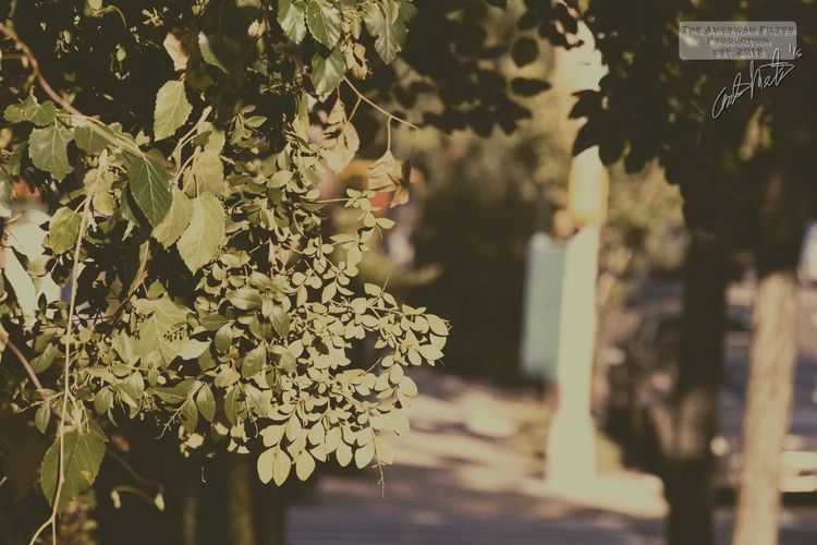 Flower Leaf Focus On Foreground Close-up Freshness Branch Growth Bunch Of Flowers Springtime Day Beauty In Nature Fragility Blossom Petal Summer Outdoors Wildlife