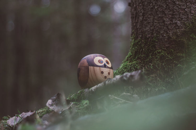 Forest Wood Wooden Wood - Material Toy Toys Wooden Toys Moss Tree Owl Plant Selective Focus Trunk Tree Trunk Animal Vertebrate Animals In The Wild Animal Themes One Animal Nature Animal Wildlife Bird No People Close-up Day Outdoors Land Green Color Growth