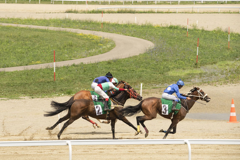 Animal Domestic Animals Caballos Speed Strength Skill  Gallop Pursuit  Follow Horses Racecourse Hippodrome Course People Man Ride Rider First Green Grass Competitors Sports Track Sports Race Competition Competitive Sport Horse Racing Sport Jockey Riding Working Animal Horse