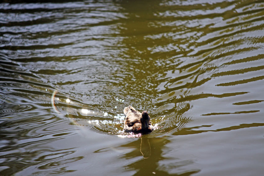 Animal Themes Duck Glint Swimming Twinkle Light Twinkling Lights Water Waves