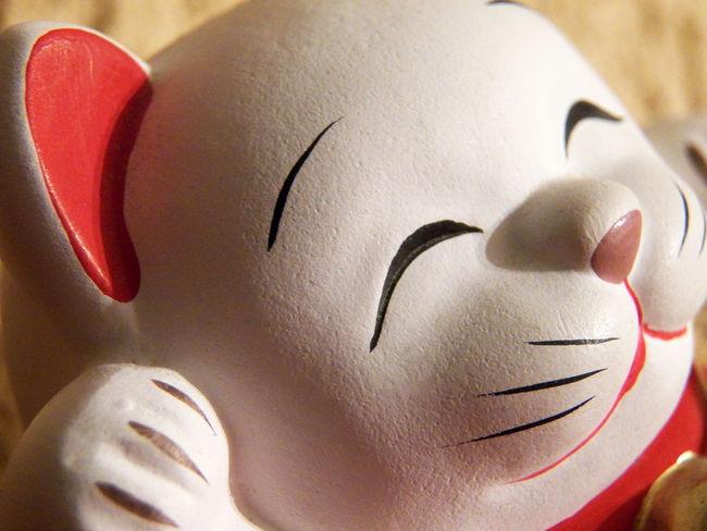 Close up of a cat head with smile .. Cherfull Cat Happiness Happiness Cat Cat Head Cherfull Smile Eyes Closed  Headshot White Head Mustaches Bonheur Sourire Nez Rose really Close-up Granular Face Detail Pink Nose Smile :) Happiness😊 Smile ✌ Sourire :) Tete De Chat Maneki-neko Head Maneki-neko Japonaise Culture