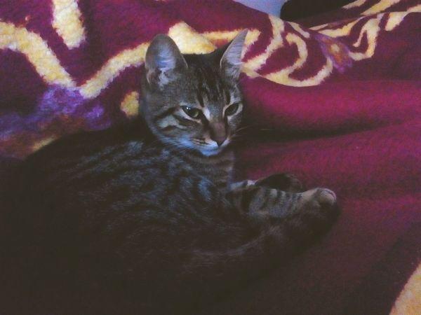 MyLove❤ Cats Cat Kitty Cute Pets Catsagram Welovecats Cute Cute Cats