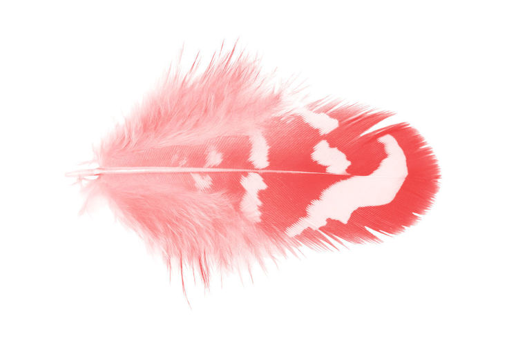 Studio Shot White Background Close-up Indoors  Cut Out Red No People Single Object White Color Copy Space Shape Still Life Feather  Pattern Social Issues Textile Art And Craft Softness