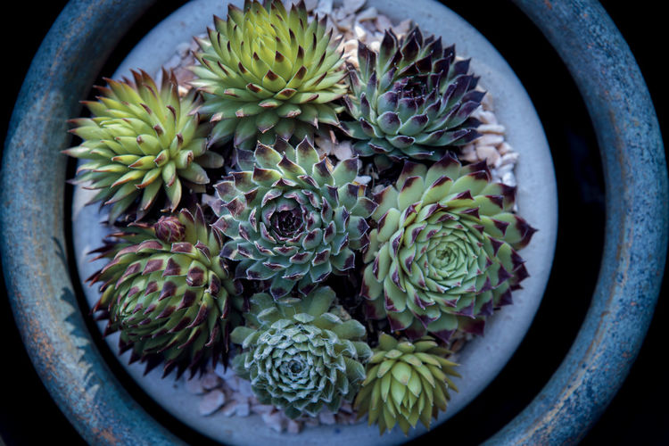 Directly above shot of succulent plant in pot