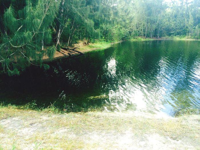 Lake Hidden Lurking Alligator Gators Scenic Scenery Tranquility Natural Nature Water Lake Beautiful Eerie Woods Trees