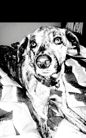 Taking Photos Cheese! I Love My Dog Monochrome