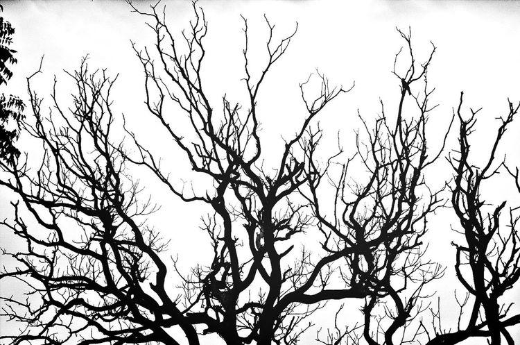 Blackandwhite Nature_collection EyeEm Nature Lover EyeEm Best Shots