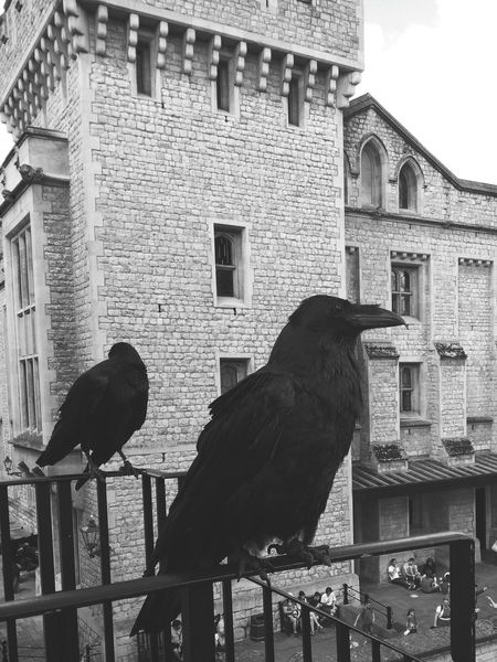 Tower Of London Hanging Out with the Ravens Monochrome Photography Architectural Feature Historic Outdoors Building Exterior Honor5x My Year My View
