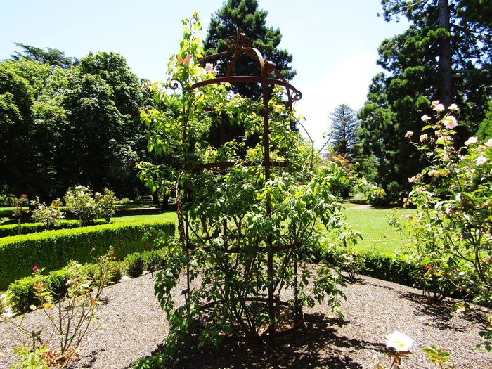 Vine Stand Plant Zero People Outside Outside Photography No People Vine Vine - Plant Vines Vines On A Structure Vines On Steel Steel Vines Frame Tree Sunlight Sky Green Color Grass Growing Plant Life Plantation Stem Stalk Young Plant Agricultural Field