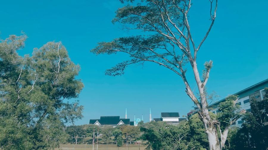 Low angle view of trees and buildings against blue sky