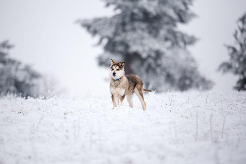 Dog on snow covered tree