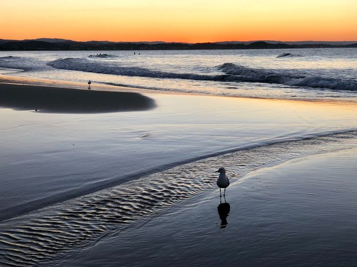 View of seagull on beach