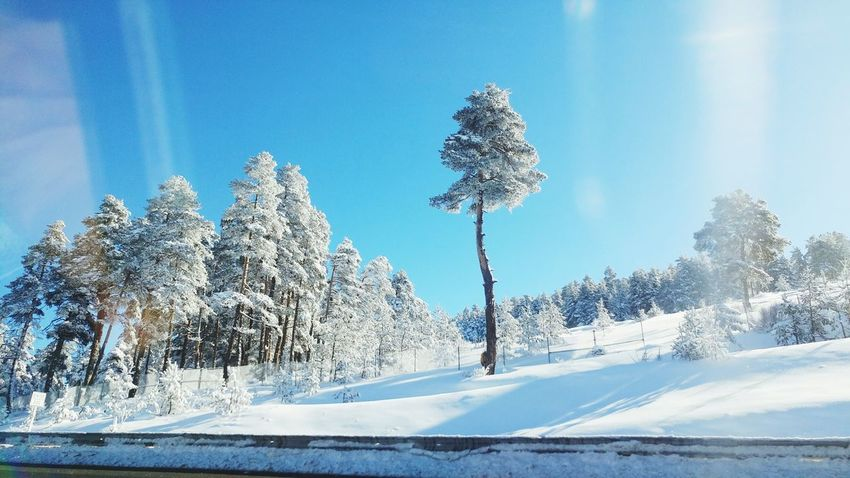 Tree Pinaceae Nature Cold Temperature No People Sky Snow Plant Landscape Outdoors Scenics Day Beauty In Nature