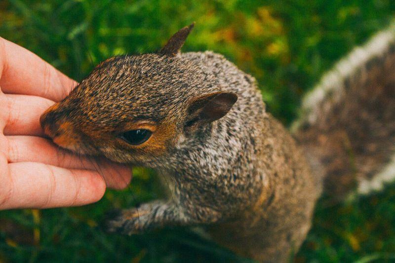 Animals One Animal Holding Animals In The Wild Mammal Squirrel EyeEmNewHere The Week On EyeEm
