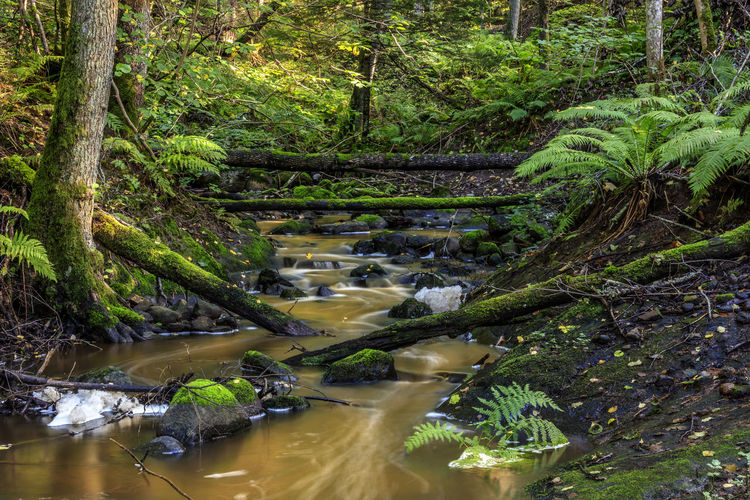 A calm creek with old moss-covered logs not far from Stockholm. A place to renew your inner energy Calmness Creek Green Nature Sweden Moss No People Orange Color Stream Summer Vibrant Color Water