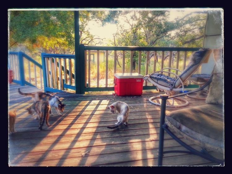 Porch Dreams Back Porch View Day Domestic Animals Early Morning Good Life No People Pets Porch Sunrise