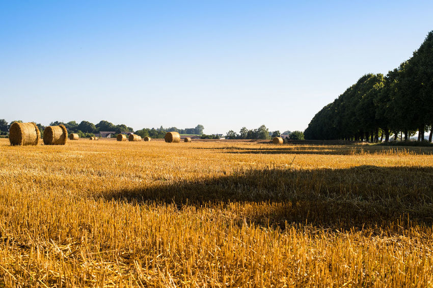 Agriculture Bauernhof Beauty In Nature Blue Clear Sky Countyside Cultivated Land Farmer Field Grass Harvest Harvest Time Horizon Over Land Landscape Landschaft Nature No People Outdoors Rural Scene Sky Tranquil Scene Tranquility