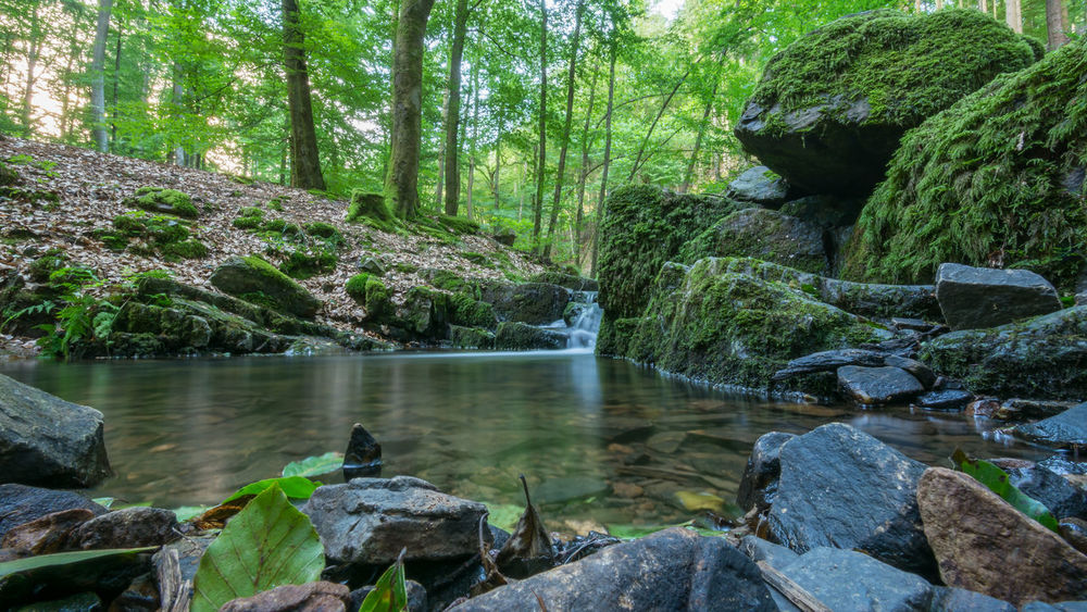 Der Wellesbach Beauty In Nature Day Forest Green Color Growth Idyllic Leisure Activity Lifestyles Nature Non Urban Scene Non-urban Scene Outdoors Plant Remote Rock Rock - Object Saarland Scenics Stone Stone - Object Stream Tranquil Scene Tranquility Tree Water